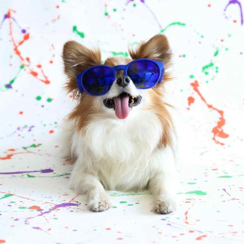 Un perro y 10 lentes de sol que tenés que ver