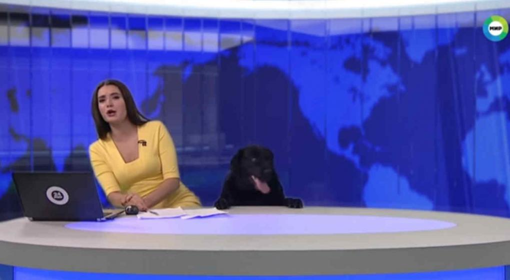 Perro interrumpe a conductora durante programa