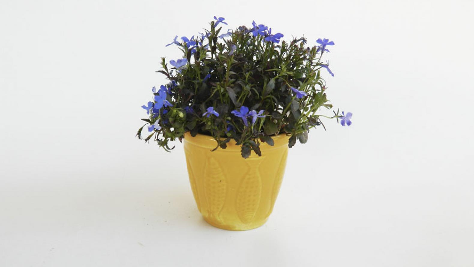 Modo primavera macetas para decorar interiores musa - Macetas para interiores ...