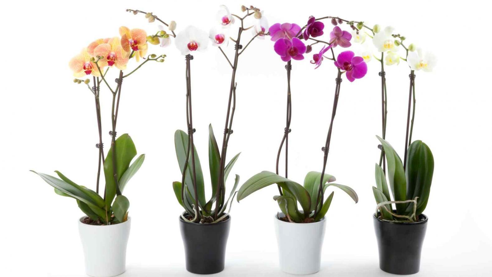 Plantas de interior tendencias y recomendaciones musa for Plantas de invierno para interior