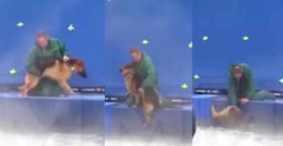 """Cancelan el estreno de """"A dog purpose"""" por una denuncia de maltrato animal (video)"""