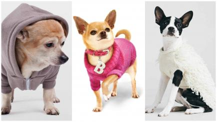 Look animal: prendas para mascotas