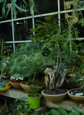 Jardinería de verano: plantas recomendadas para empezar el año con naturaleza