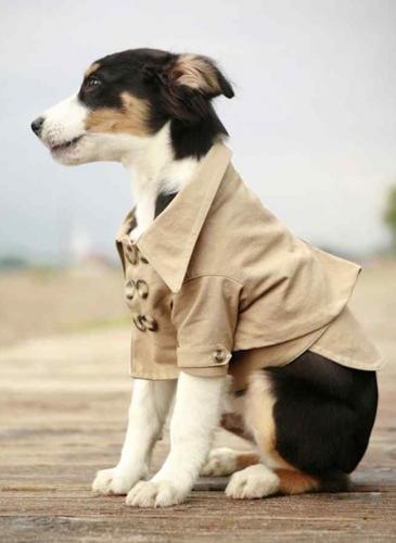Mascota Style